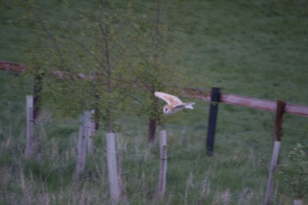 Holiday Home with resident Barn Owls Mutton Barn